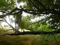 377 redbube scalatore di mann klettert nackt auf 7c8a1 Baum Wald Arsch pene degli uomini