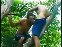 Dirty deeds outdoors begin in a tree